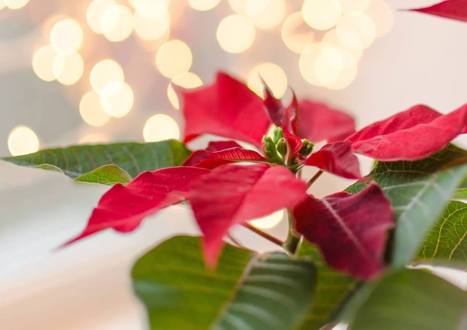 Support Duet, Create a Holiday Tradition at the 28th Annual Poinsettia Tea on Dec. 2